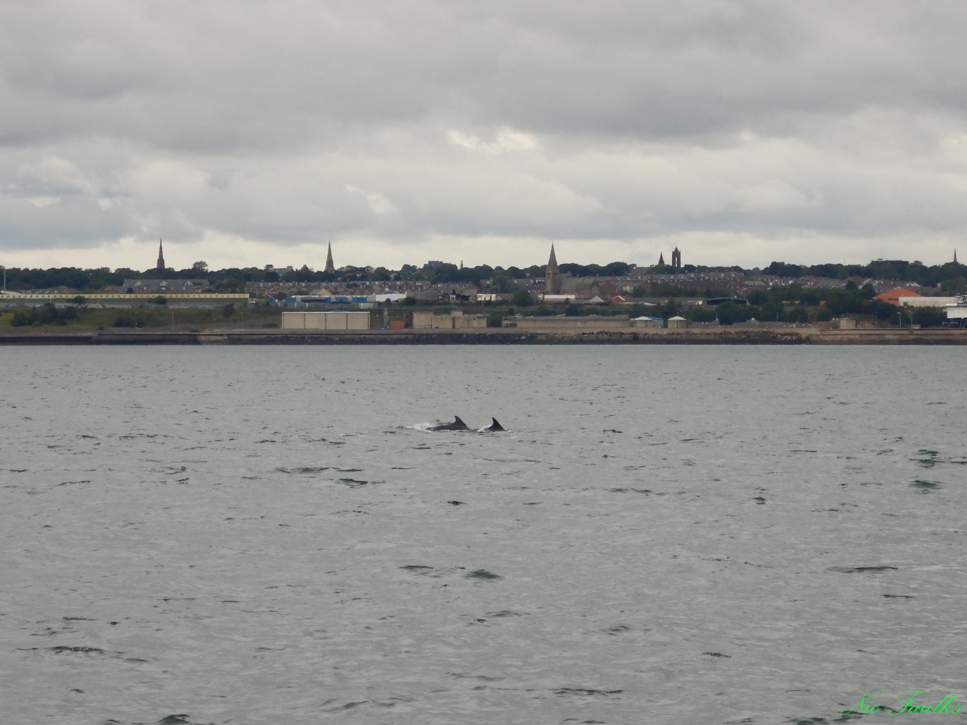 Dolphins close to Hendon Rocks