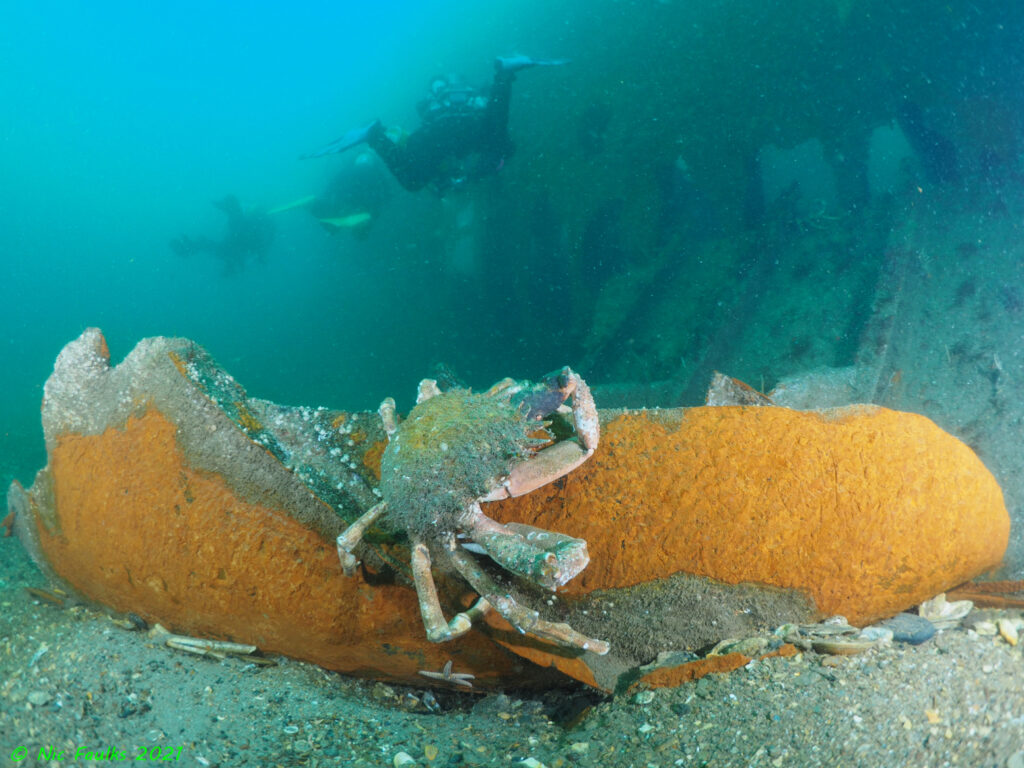 Spiny spider crab on the JEL
