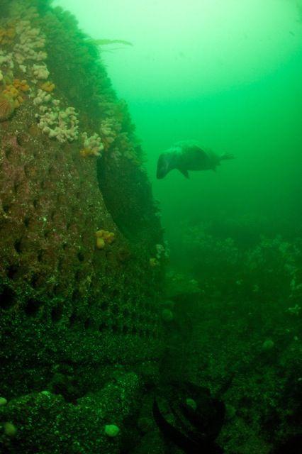 Seal at boiler