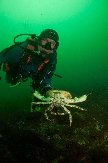 Diver with crab