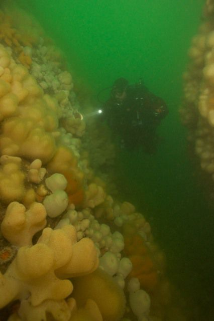 Diver in gully