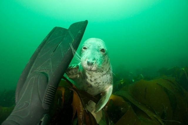 Seal rubbing fin