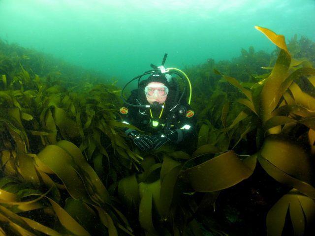 Kev above kelp