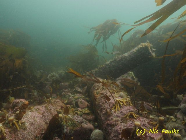 Cannon on seabed