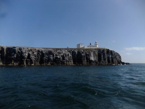 Early Season Diving on the Farnes