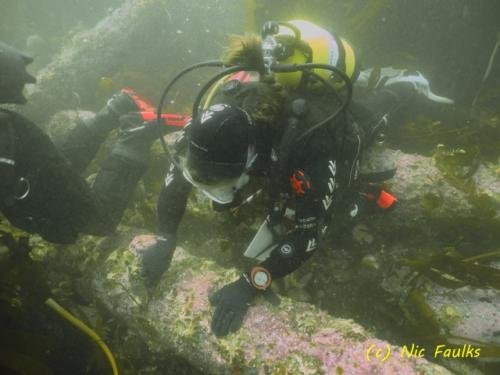 Diver  cleaning the  cannon