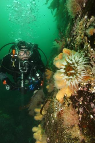 Tiago and the anemone