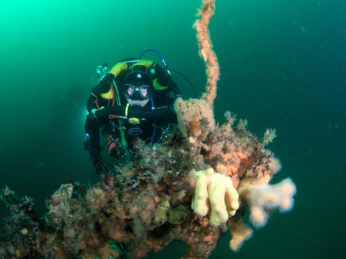Si-fish-fraoch Ban Wreck